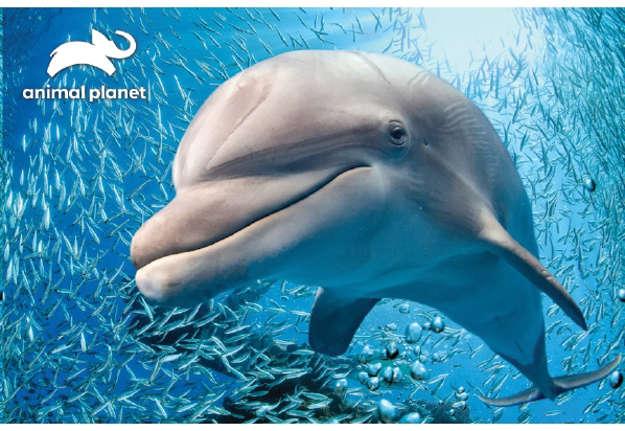 Immagine di Puzzle 3D Animal planet: Dolphin 150pz