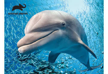 Immagine di Puzzle 3D Animal Planet: Dolphin 48pz