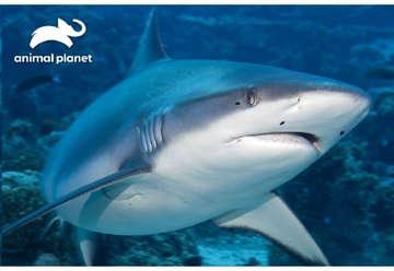 Immagine di Puzzle 3D Animal planet: Shark 150pz