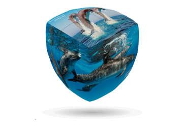 Immagine di V-Cube Dolphin 3x3cm