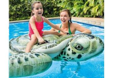 Immagine di Cavalcabile vera tartaruga 191x170cm