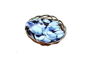 Immagine di Cestino con conchiglie diametro 10cm