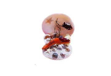 Immagine di Codackia tigerina con pesci 9cm
