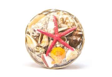Immagine di Cestino con conhiglie e stella marina 8