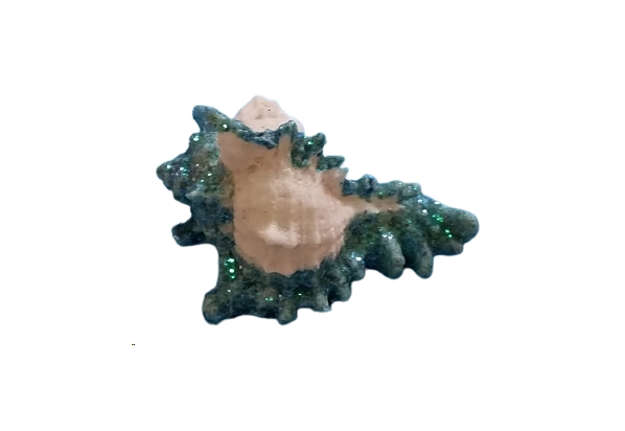 Immagine di Conchiglia murex segnatempo