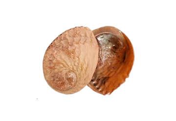 Immagine di Haliotis bianco midae grezzo 05-06 - 15 cm