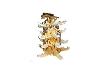 Immagine di Rete con stelle marine colori assortiti