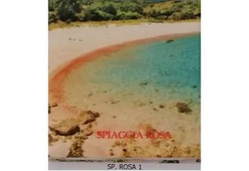 Immagine di Magnete Ceramica Budelli spiaggia rosa 5x5cm