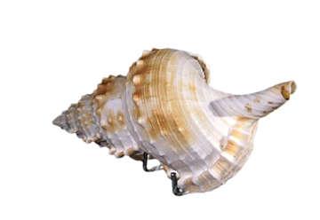 Immagine di Hypopus Singolo Limato 5 6 cm